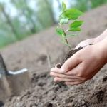 Taking Responsibility: A Pledge To Plant 2,300 Saplings in 2019